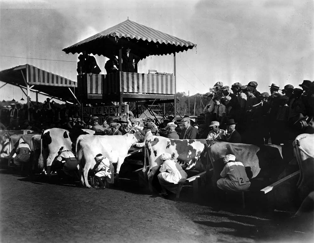 Cow milking contest, Topeka, Kansas