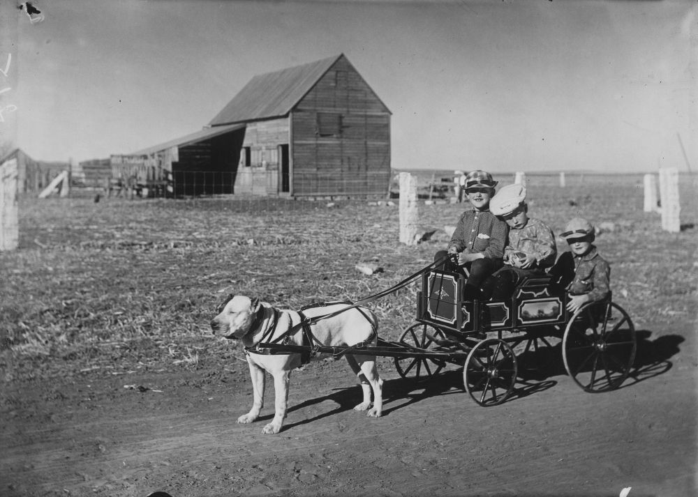 Boys in a dog-drawn wagon, Dorrance, Kansas