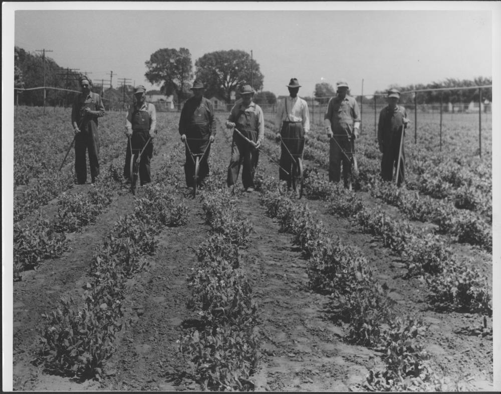 Men tilling a garden in Wichita, Kansas