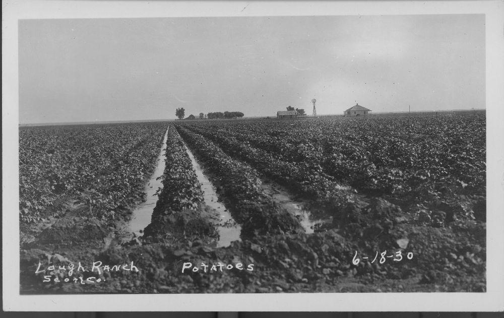 Potatoes, Lough ranch, Scott County, Kansas