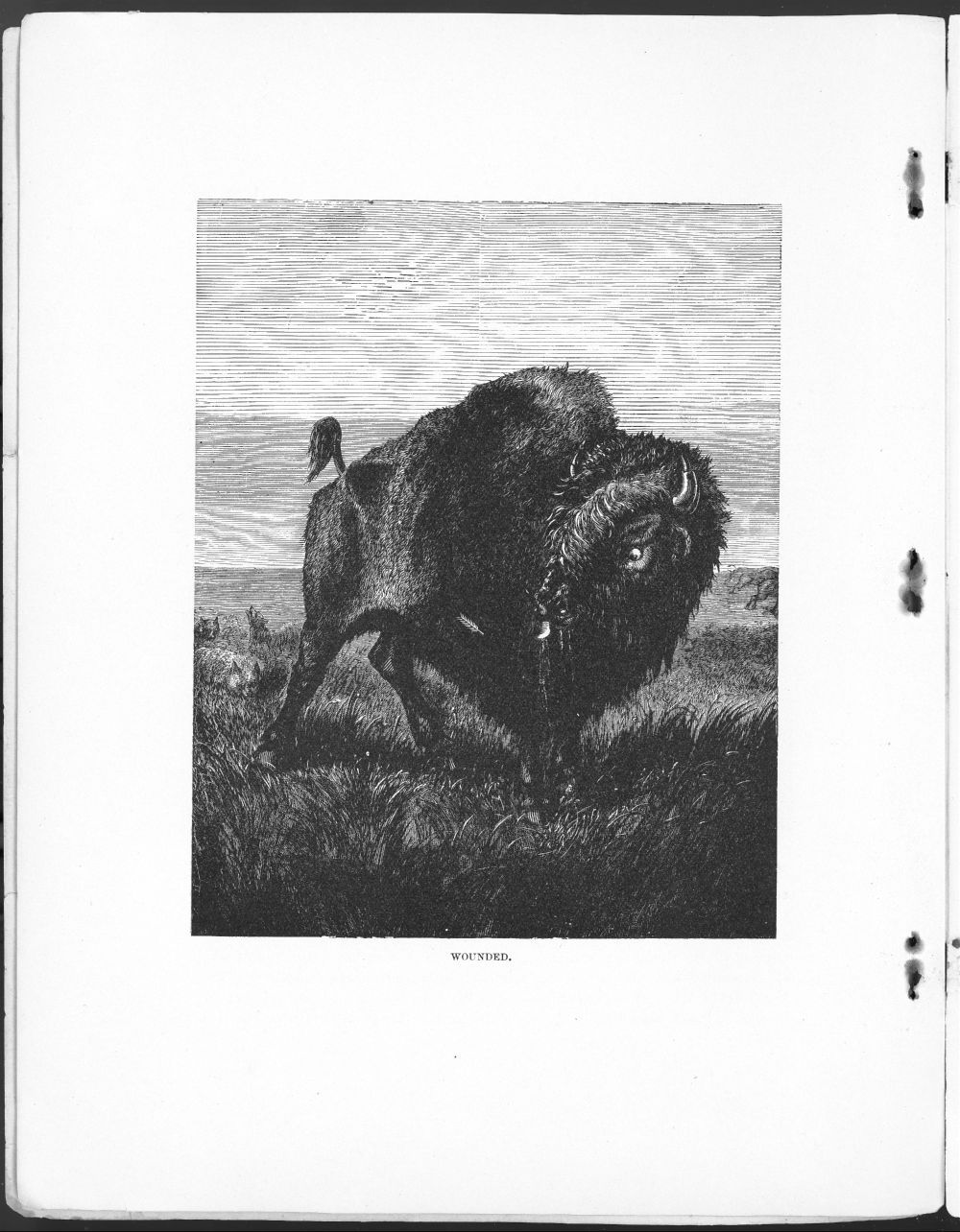 The Kansas picture book - 6