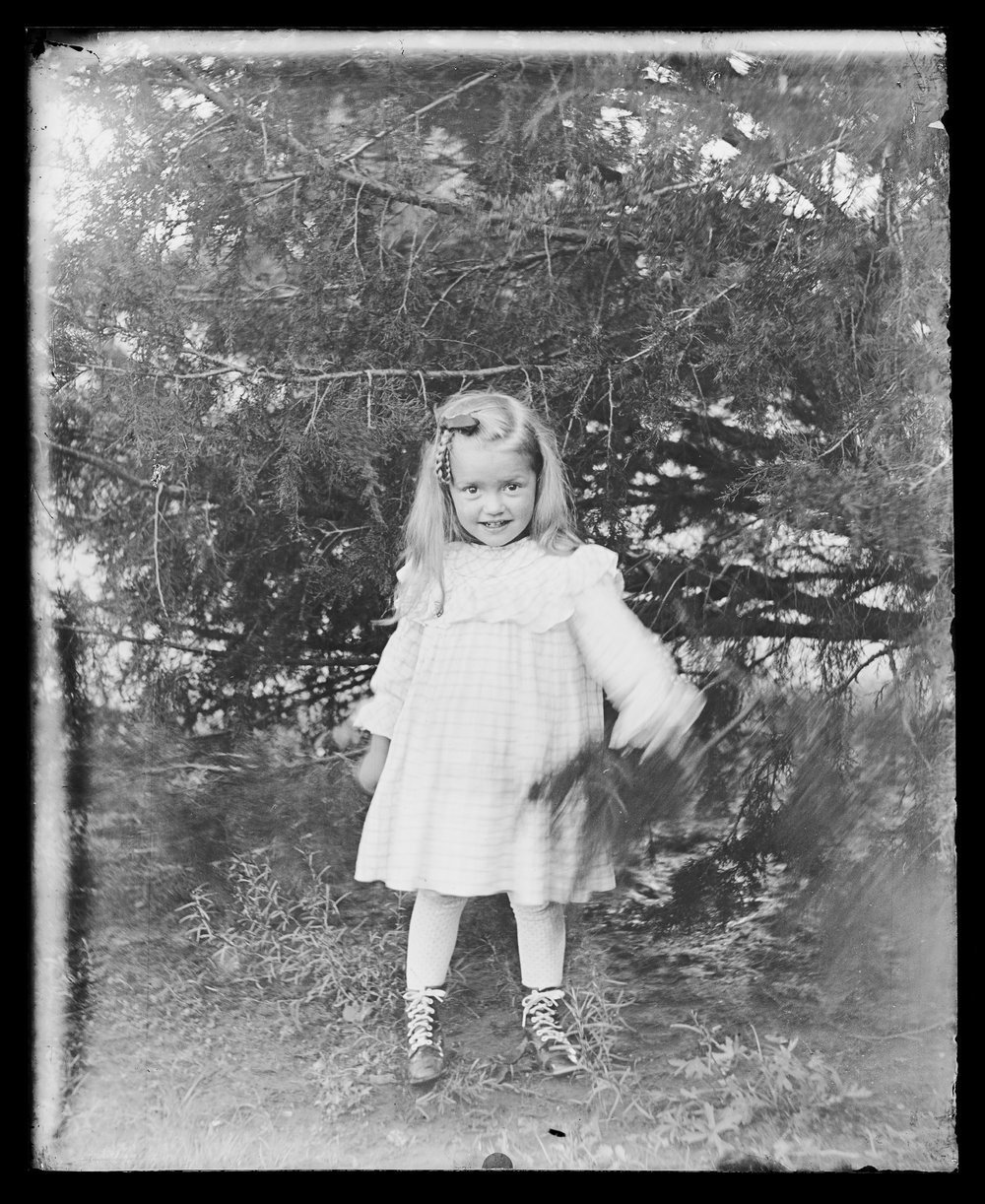 Golden Charles Dresher photograph collection - A little girl, Margaret Dresher, standing by a cedar tree on the J.N. Dresher farm, in Rice County Kansas in 1909. (Neg. 11)