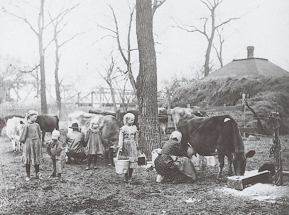 Milking of cows on Riley County farm