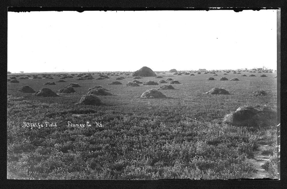Alfalfa field, Finney County, Kansas