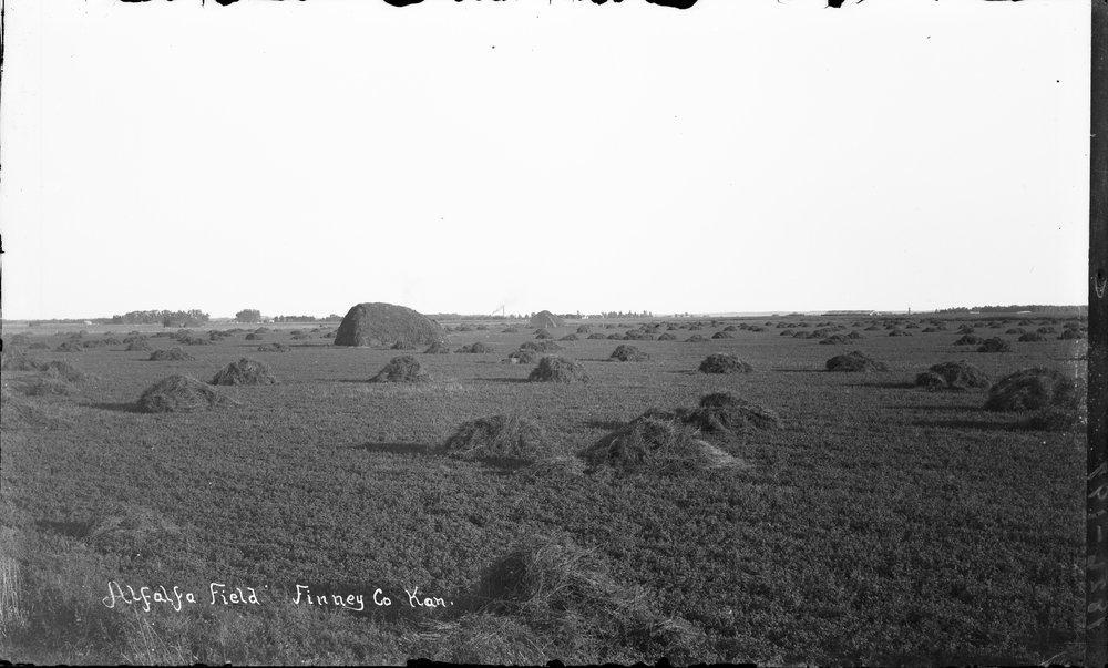 Alfalfa field, Finney County, Kansas