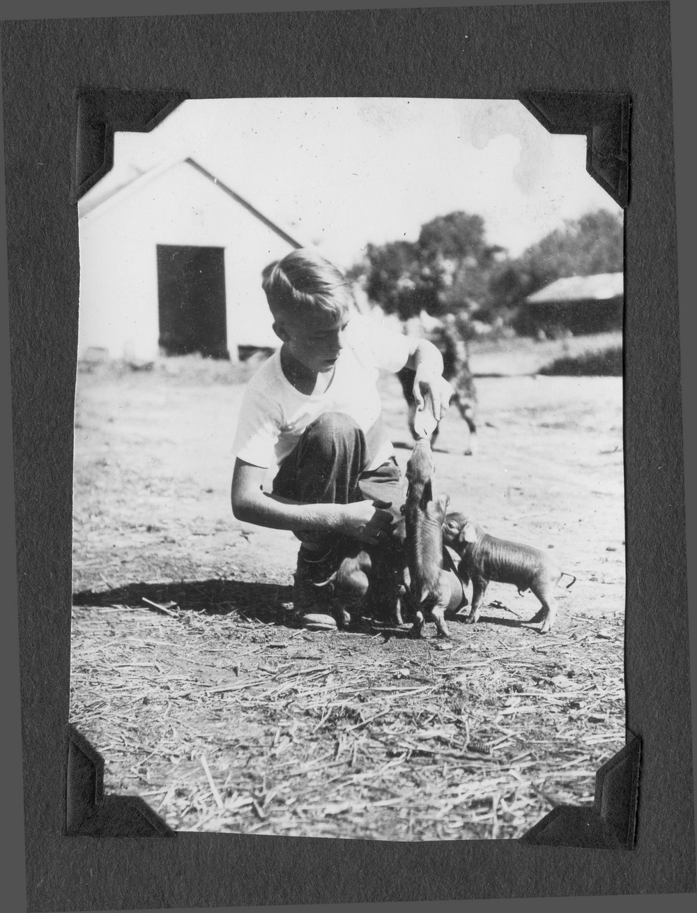 Melvin Brose photograph album - Melvin using a bottle to feed runt pigs raised by the Brose children.