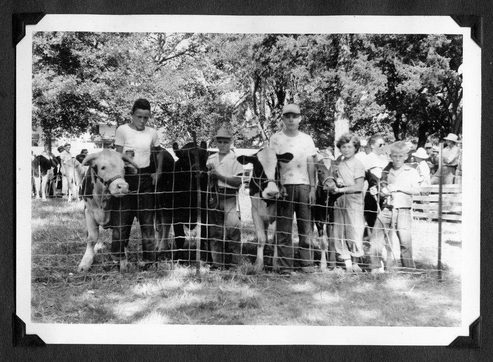 Melvin Brose photograph album - 4-H club with their calves at the Jefferson County Fair, Oskaloosa, Kansas.