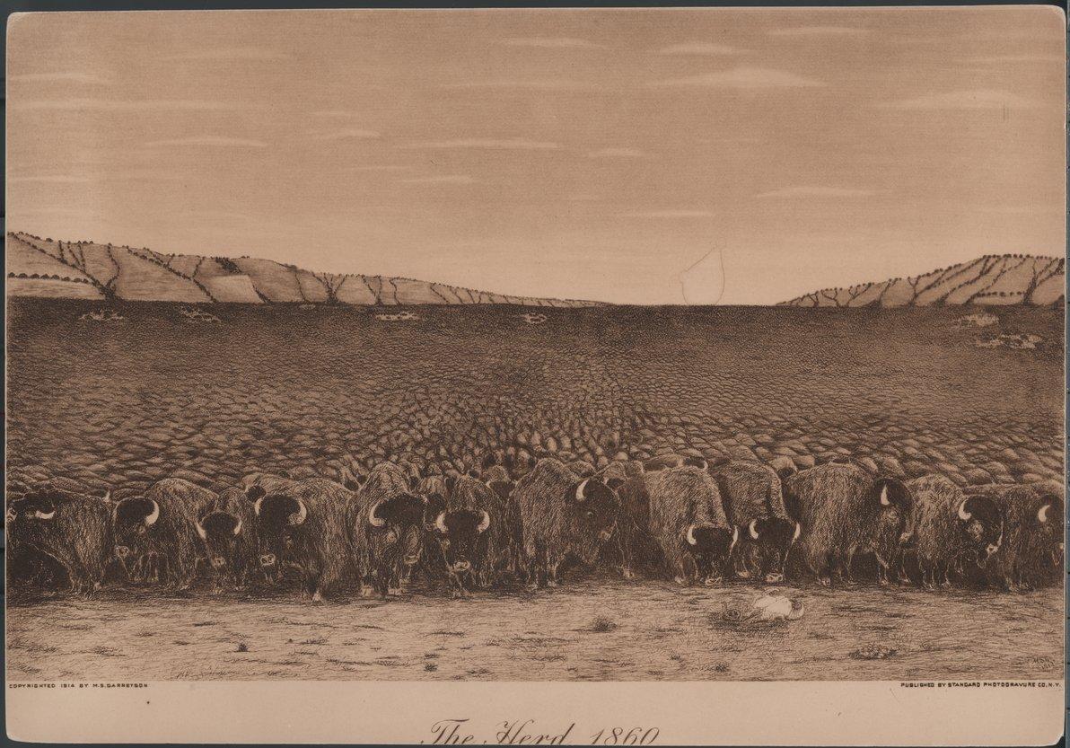 """""""The Herd, 1860"""""""
