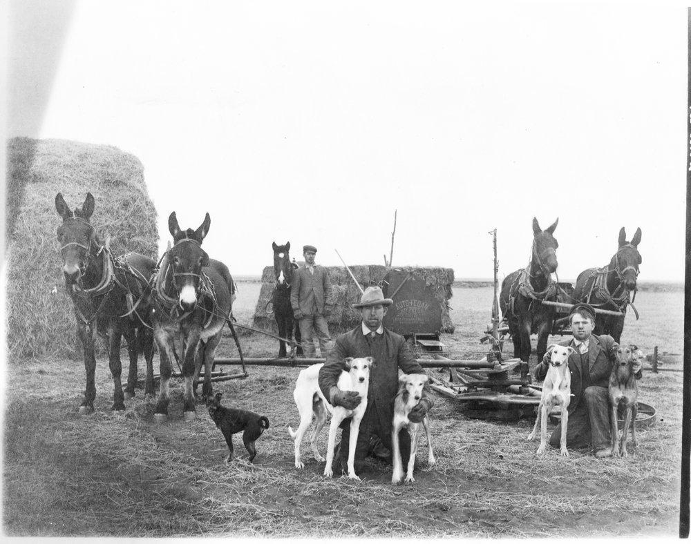 Harvesting at the Lindner farm, Finney County, Kansas