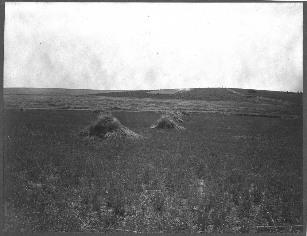 Wheat shocks in Kansas - 1
