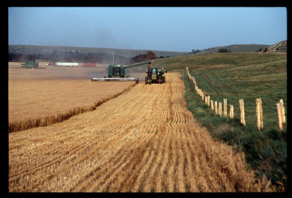 Cutting wheat, Beloit, Kansas