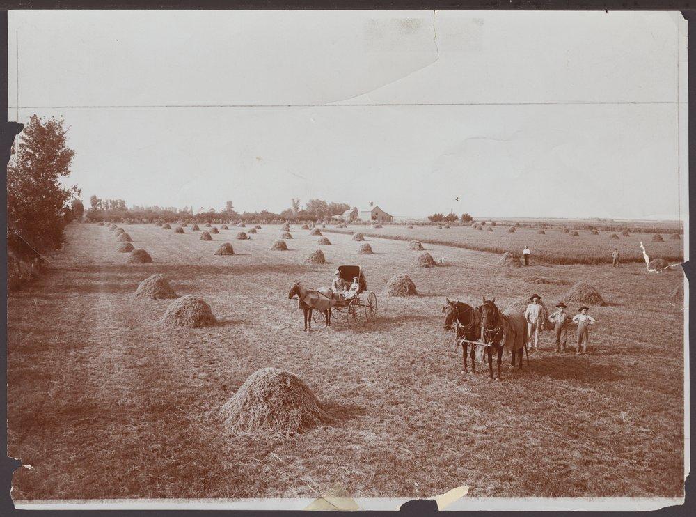 Alfalfa field, Barber County, Kansas