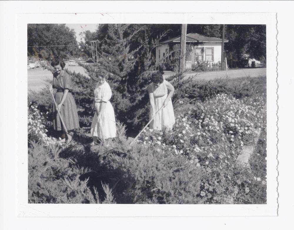 Three women gardening, Rossville, Kansas - 1