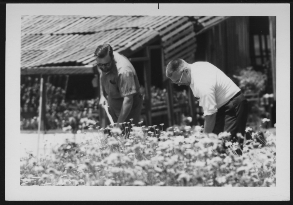 Menninger photograph collection - A photograph showing two men gardening, c.1979.  Envelope 433