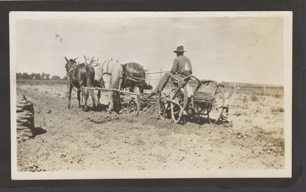 Digging potatoes on Melvin Kelsey's farm in Shawnee County, Kansas - 2