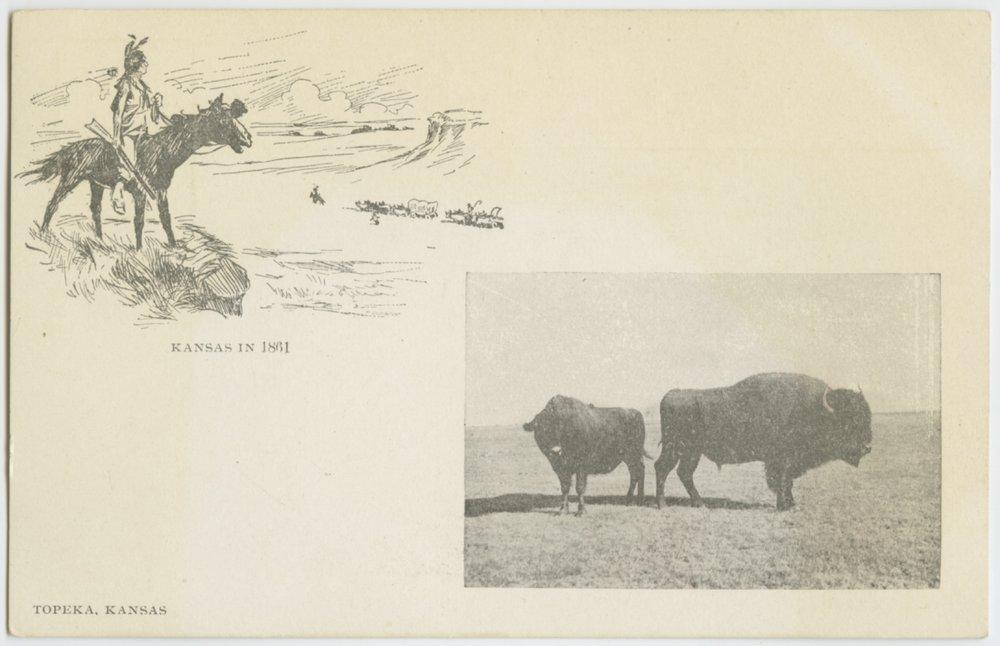 Bison in Kansas - 1