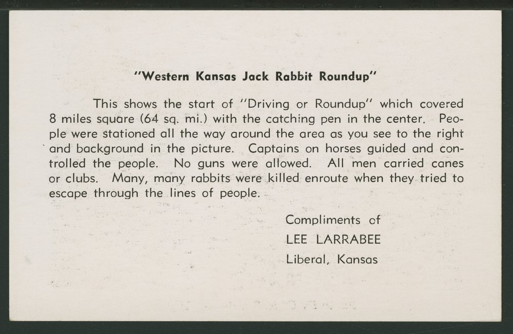 Western Kansas jack rabbit roundup - 2