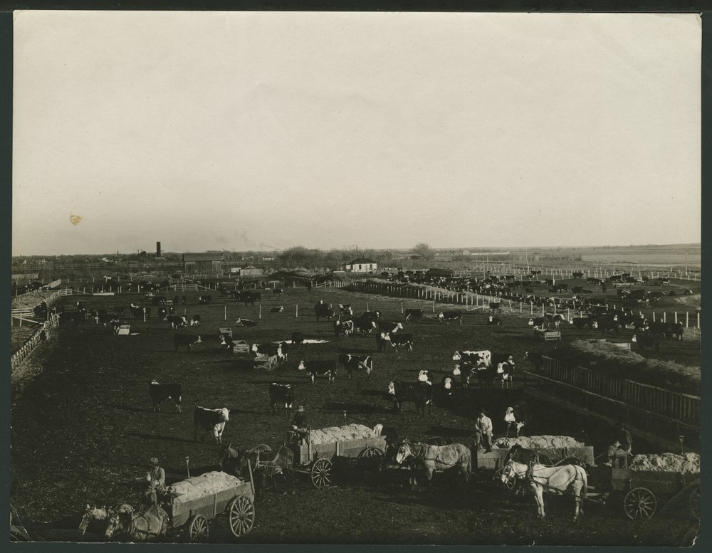 Cattle ranch in Seward County, Kansas