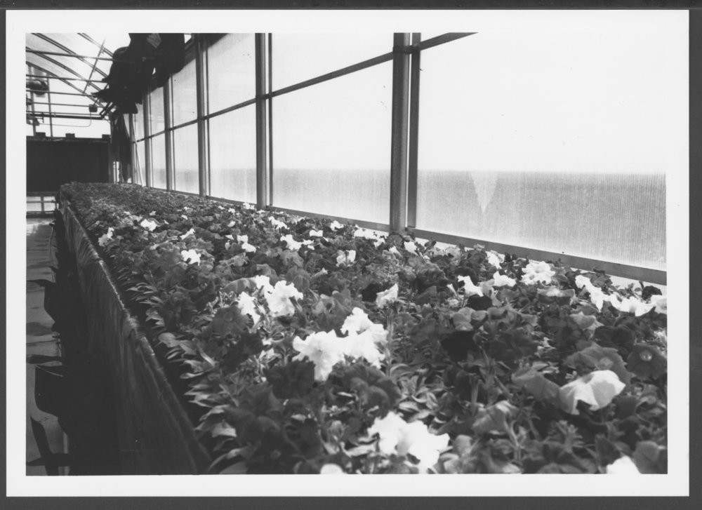 Greenhouse and gardens at the Menninger Clinic - 2
