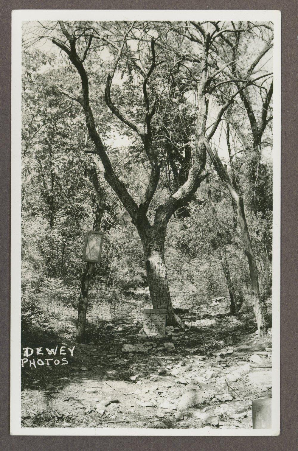 Lone Tree marking the site of the Marais de Cygnes massacre - 1 [*11]