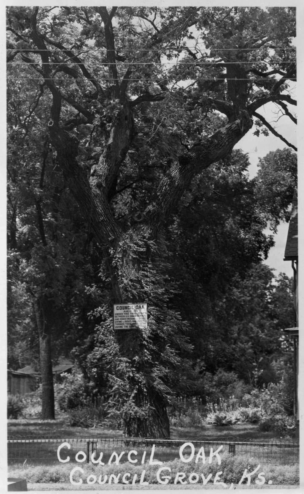 The Council Oak tree located in Council Grove, Kansas is located where the Council Grove treaty was held between William Clark and the Osage in 1825.