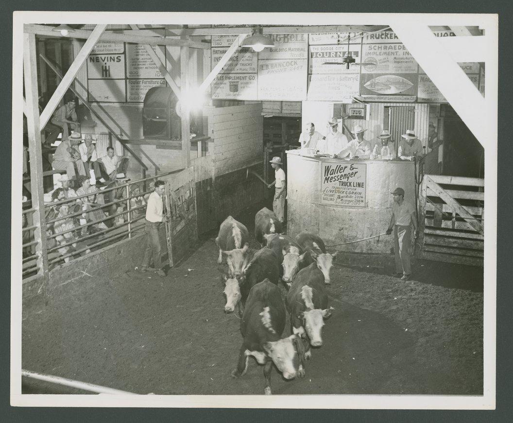 Cattle auction, Dodge City, Kansas - 1
