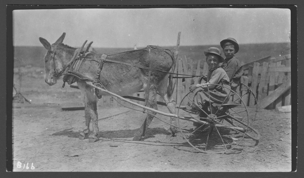 Boys with mule