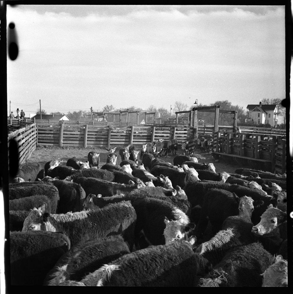 Stockyards, Eskridge, Kansas - 7