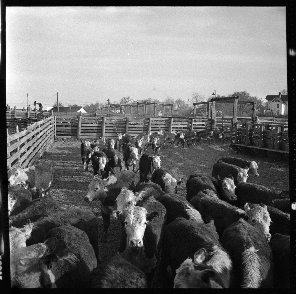 Stockyards, Eskridge, Kansas - 10