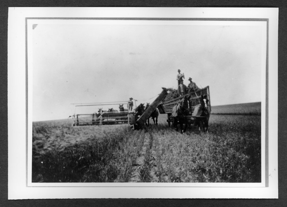 Scenes of Sherman County, Kansas - One of the first grain headers in Sherman County, located on the Henry Tagtmeyer farm.