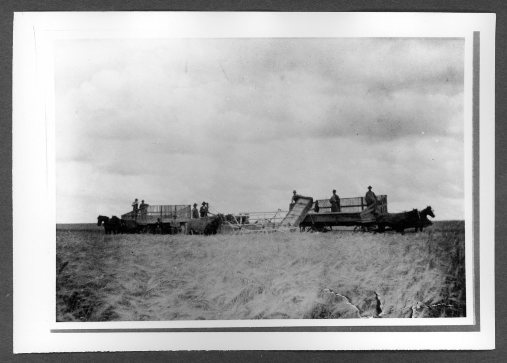 Scenes of Sherman County, Kansas - One of the first headers in Sherman County, locatd on the Henry Tagtmeyer farm.