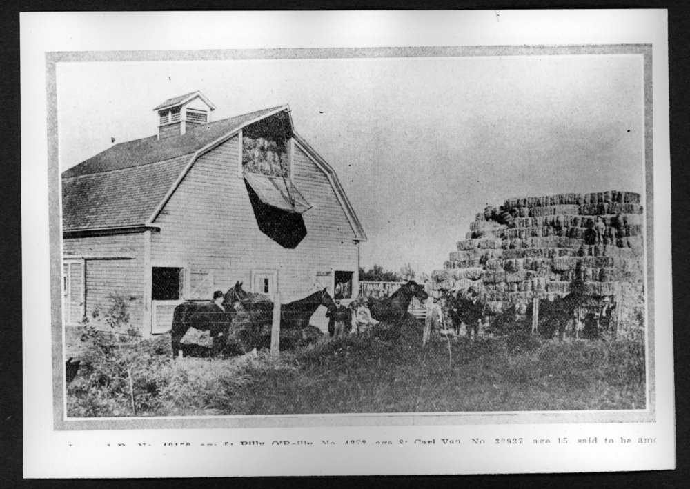 Scenes of Sherman County, Kansas - G.L. Calvert barn with pure bread horses.