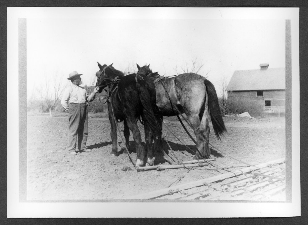 Scenes of Sherman County, Kansas - Jacob Trachsel and his team of horses brought from Iowa in 1886.  Old
