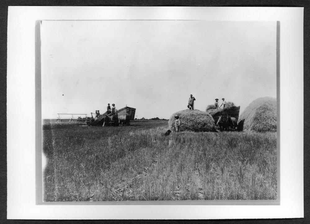 Scenes of Sherman County, Kansas - W.R. Walker farm, heading and stacking.