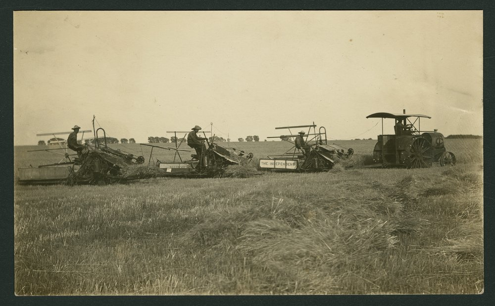 George and Edmond Whiting binding wheat near Mount Hope, Kansas - 1