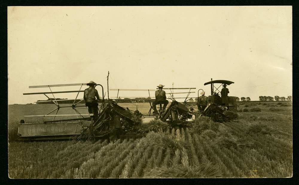 George and Edmond Whiting binding wheat near Mount Hope, Kansas - 3
