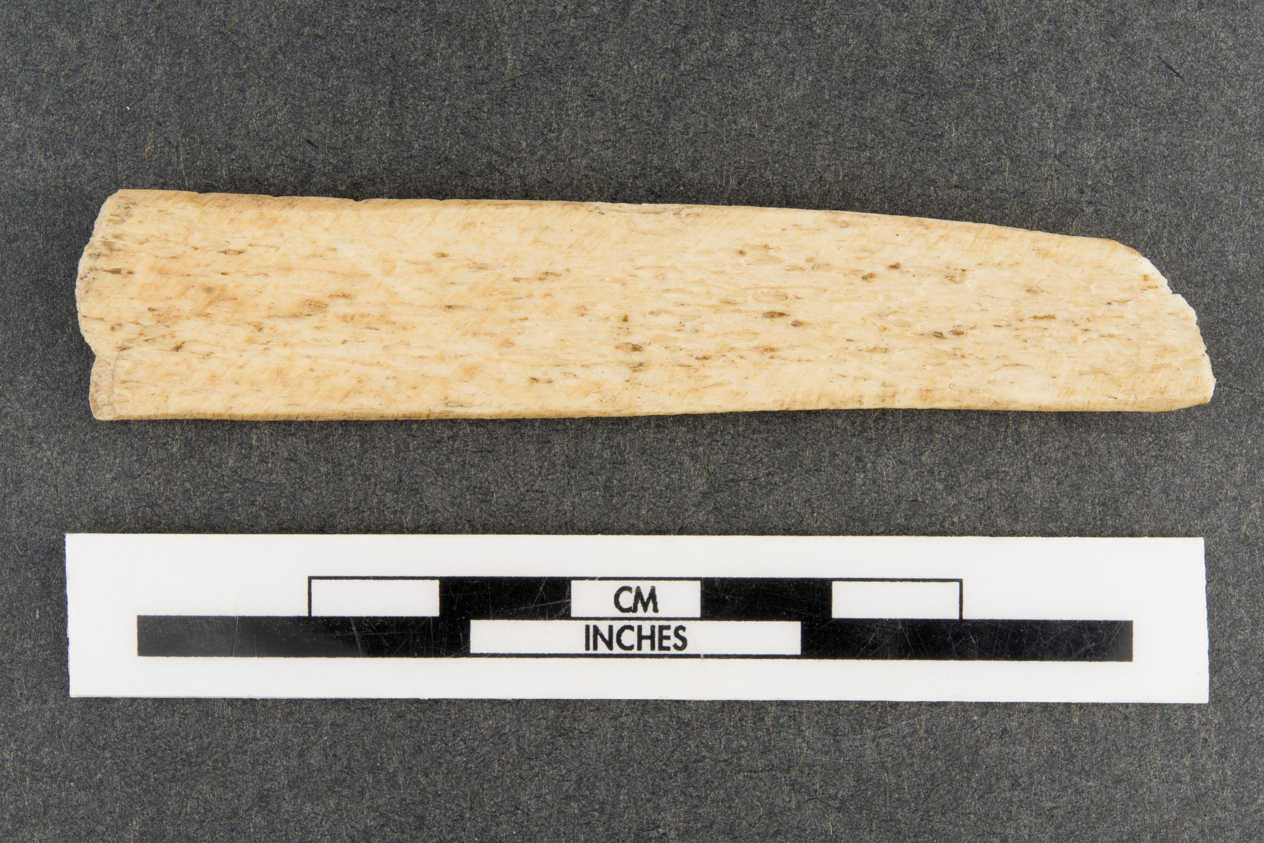 Bone Rasp from the Saxman Site, 14RC301 - 2