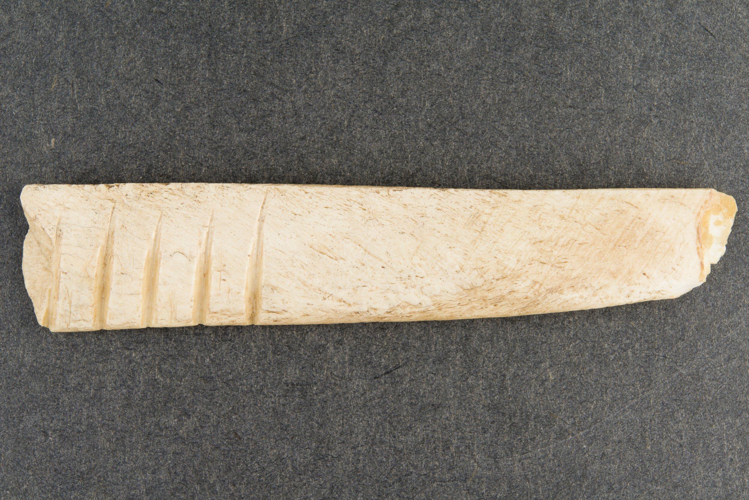 Bone Rasp from the Saxman Site, 14RC301 - 3