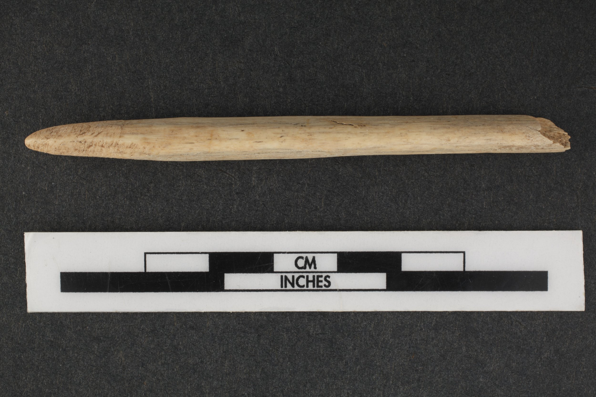 Bone Awl from the Saxman Site, 14RC301 - 1