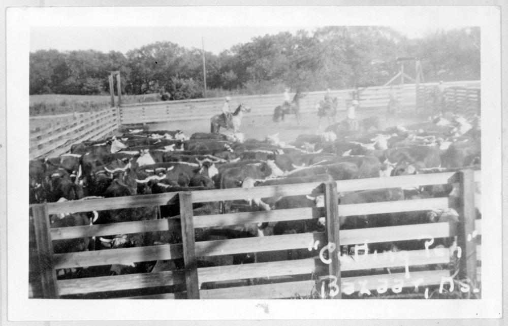 Cattle, Bazaar, Kansas