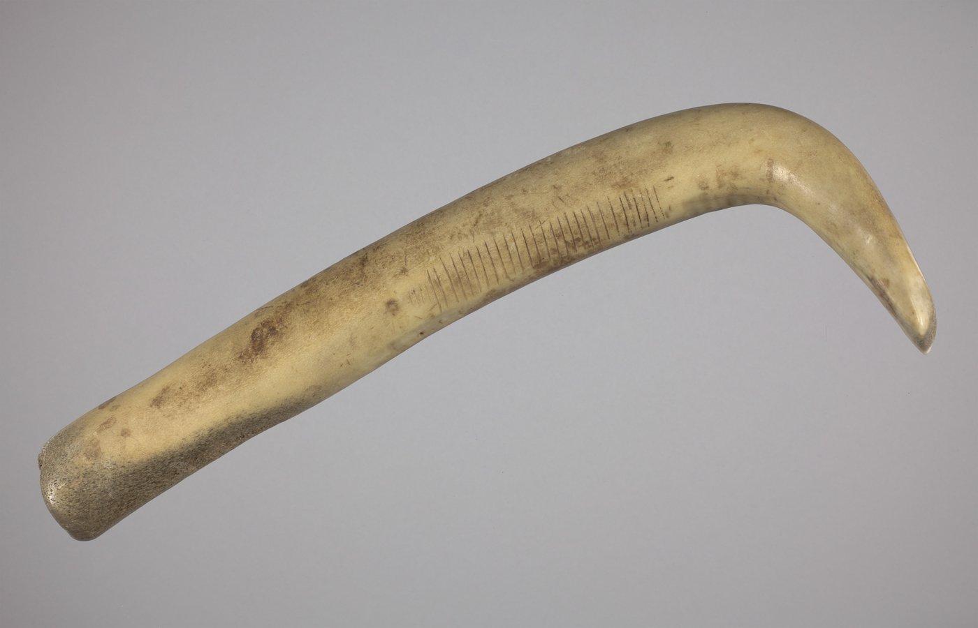 Elk Antler Scraper Handle from the Thompson Site, 14RC9 - 3