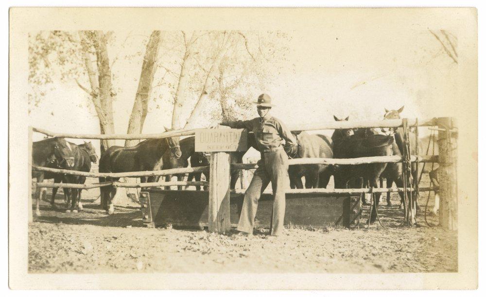 Horses and mules at Fort Riley, Kansas - 4
