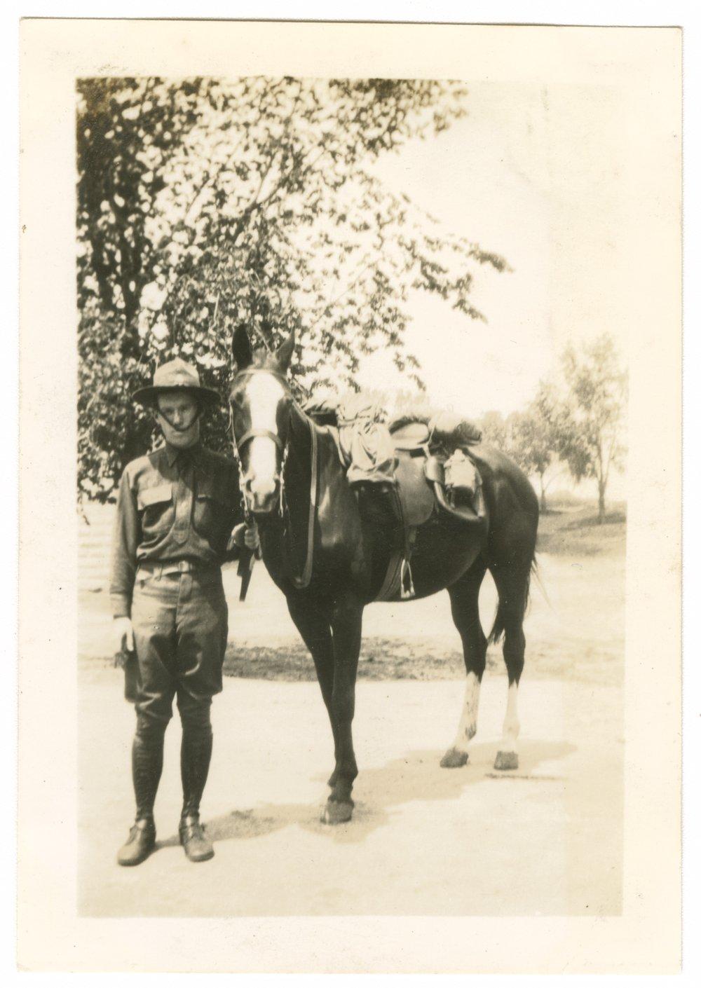 Horses and mules at Fort Riley, Kansas - 3