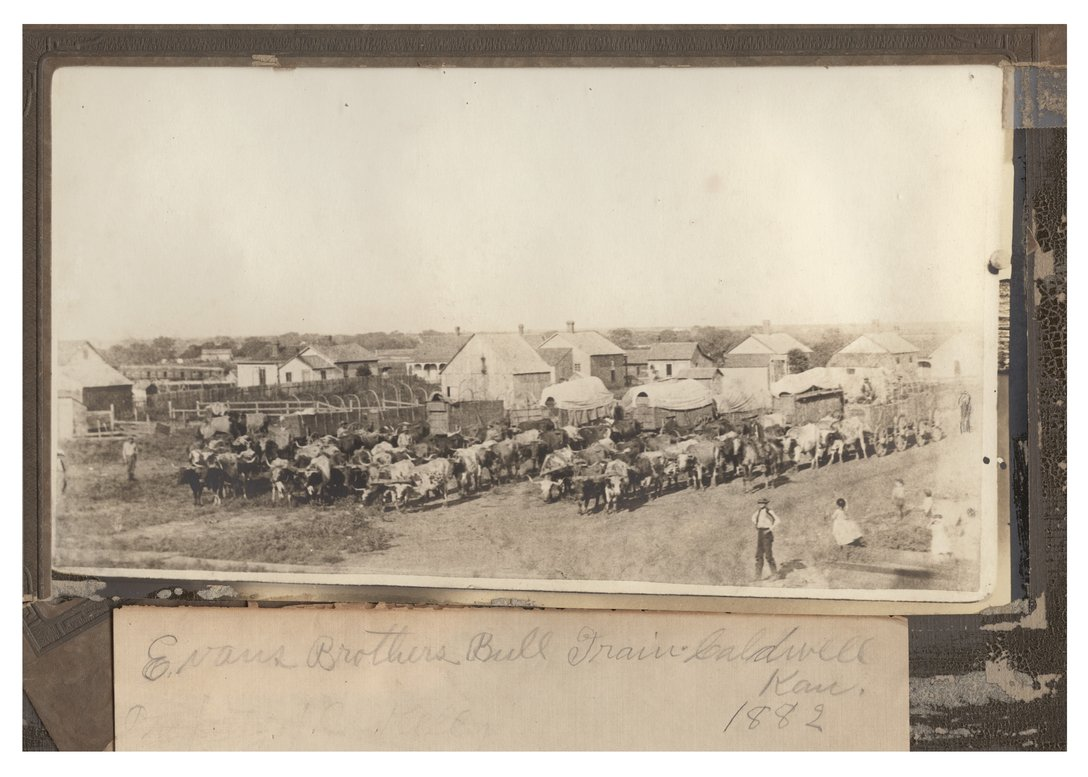 Evans Brothers bull train in Caldwell, Kansas