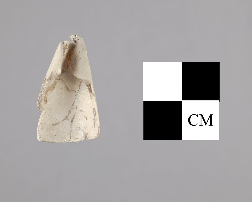 Sea Snail Shell from the Radio Lane Site, 14CO385 - 2