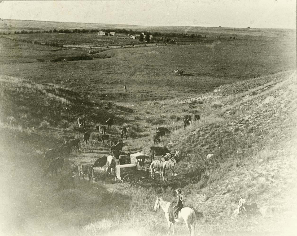 F. M. Steele's photography wagon