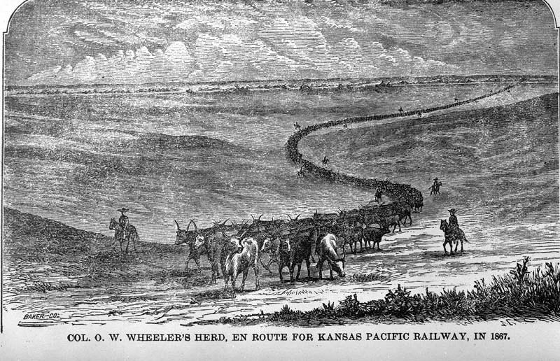 Col. O.W. Wheeler's cattle herd