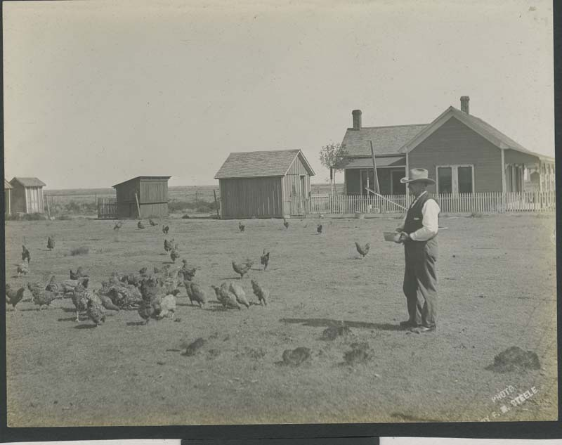 A man feeding chickens