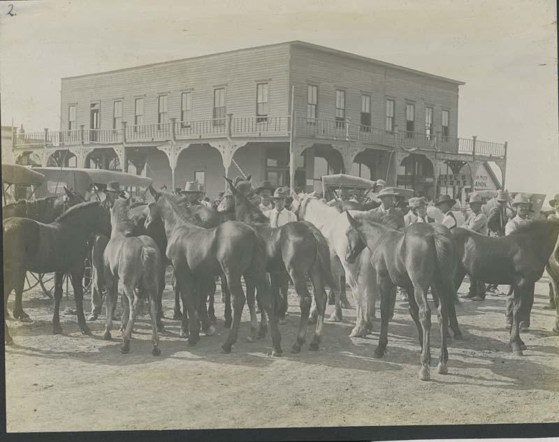 Horse sale, Santa Fe, Haskell County, Kansas