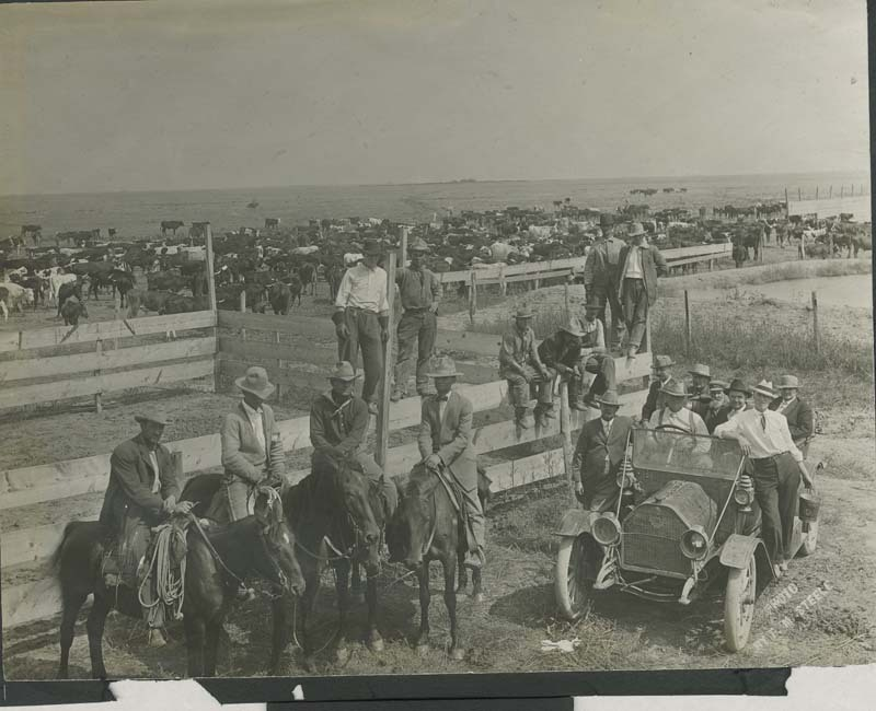 Cattlemen, cowboys, and cattle